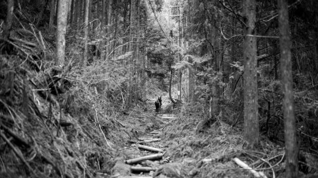 Kumano Kodo: a trek to Japan's sacred heart