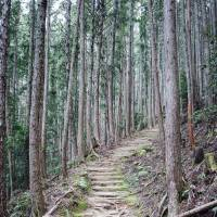 Steps on the Dainichigoe path between Hongu Taisha and Yunomine Onsen | DAN RUBIN