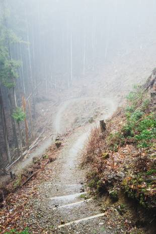 Mist covers the trail between Totsukawa Onsen and Miura Guchi.