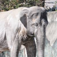 Japan zoos could be an endangered species