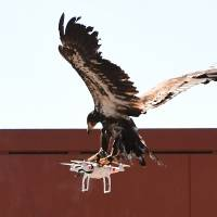 Where intrusive drones may dare, Dutch cops set to sic eagles on them