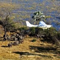 Paul Allen-funded Great Elephant Census finds poaching putting savanna pachyderms on path to extinction