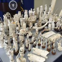 Global efforts to stop ivory traffickers still falling short