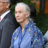 U.N. messenger of peace Jane Goodall attends a ceremony on Sept. 16, the 35th International Day of Peace, at the United Nations in New York. | AFP-JIJI