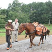 """C.W. Nicol looks on proudly as Chacha Maru, one of the trust's first two horses, is led past loaded with panniers specially designed for planned """"mountain safaris"""" for guests. 