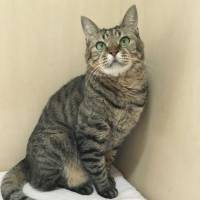 Why not me?: Komatsu the cat is still waiting for a home