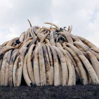 Japan gets reprieve in international effort to clamp down on ivory trade