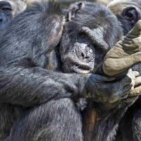 Like humans, great apes can grasp someone else's view: study