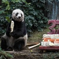 Ailing Jia Jia, world's oldest-ever panda in captivity, euthanized at 38