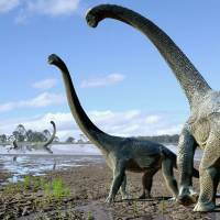 Long-necked dinosaur species discovered in Australia may have trekked from Antarctica