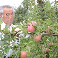 Fukushima apples to be used during World Cocktail Championships in bid to repair tarnished reputation