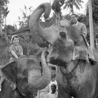 Prince Mikasa and Princess Yuriko ride elephants during a trip to Sri Lanka, then known as Ceylon, in this file photo from 1956. | KYODO