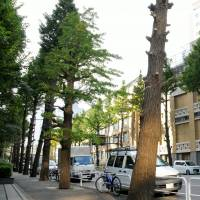 Tokyo residents' petition prompts reconsideration of plan to fell trees