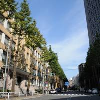 Plan to cut down historic trees in Tokyo's Chiyoda Ward faces local opposition
