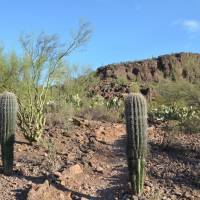 Savoring a 'sanctuary' in the Arizona desert