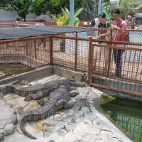 Onlookers wait for a sign of movement at the Atagawa Tropical & Alligator Garden. | STEPHEN MANSFIELD