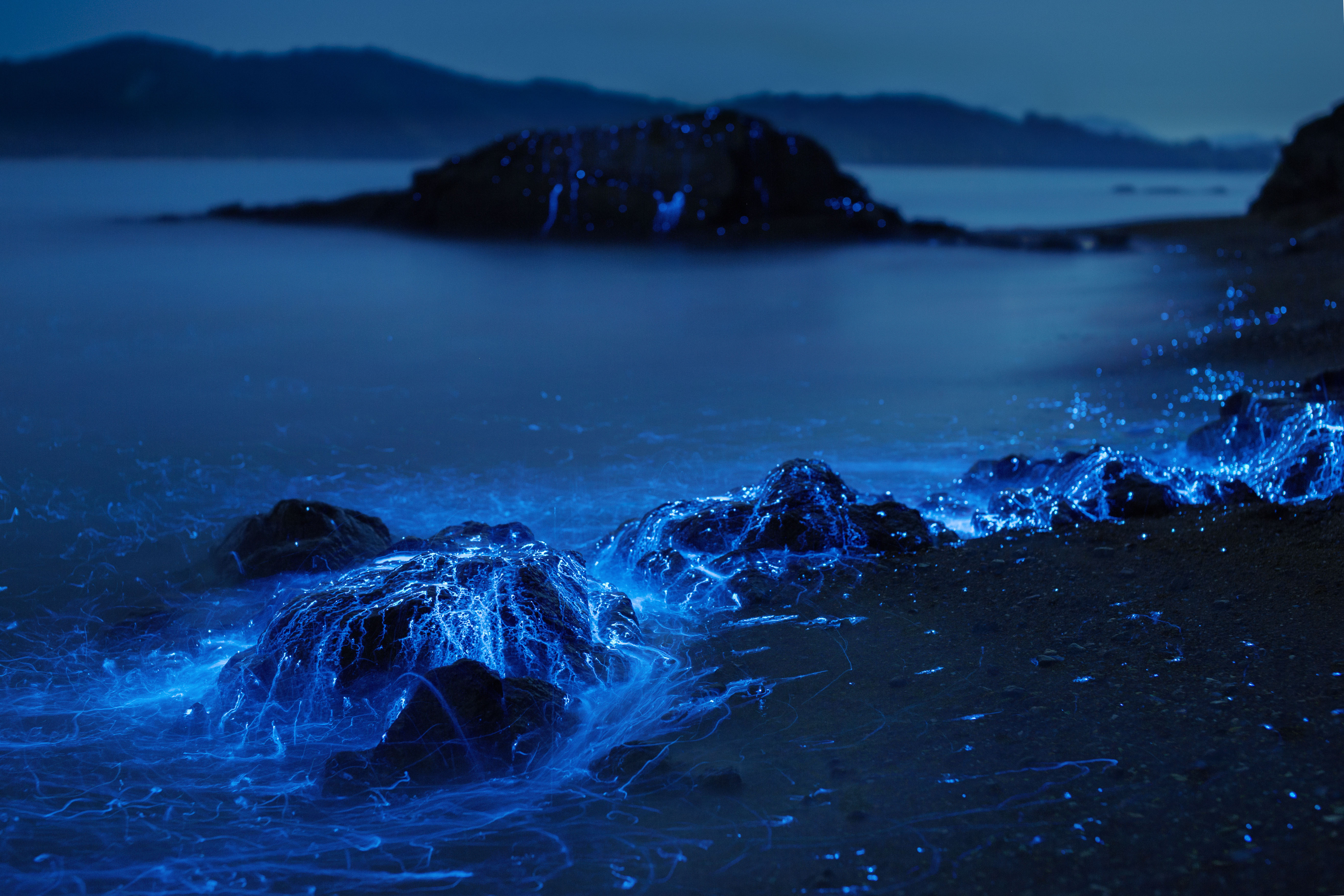 Light trails: By activating a chemical in their light organ, sea fireflies can communicate or startle predators.
