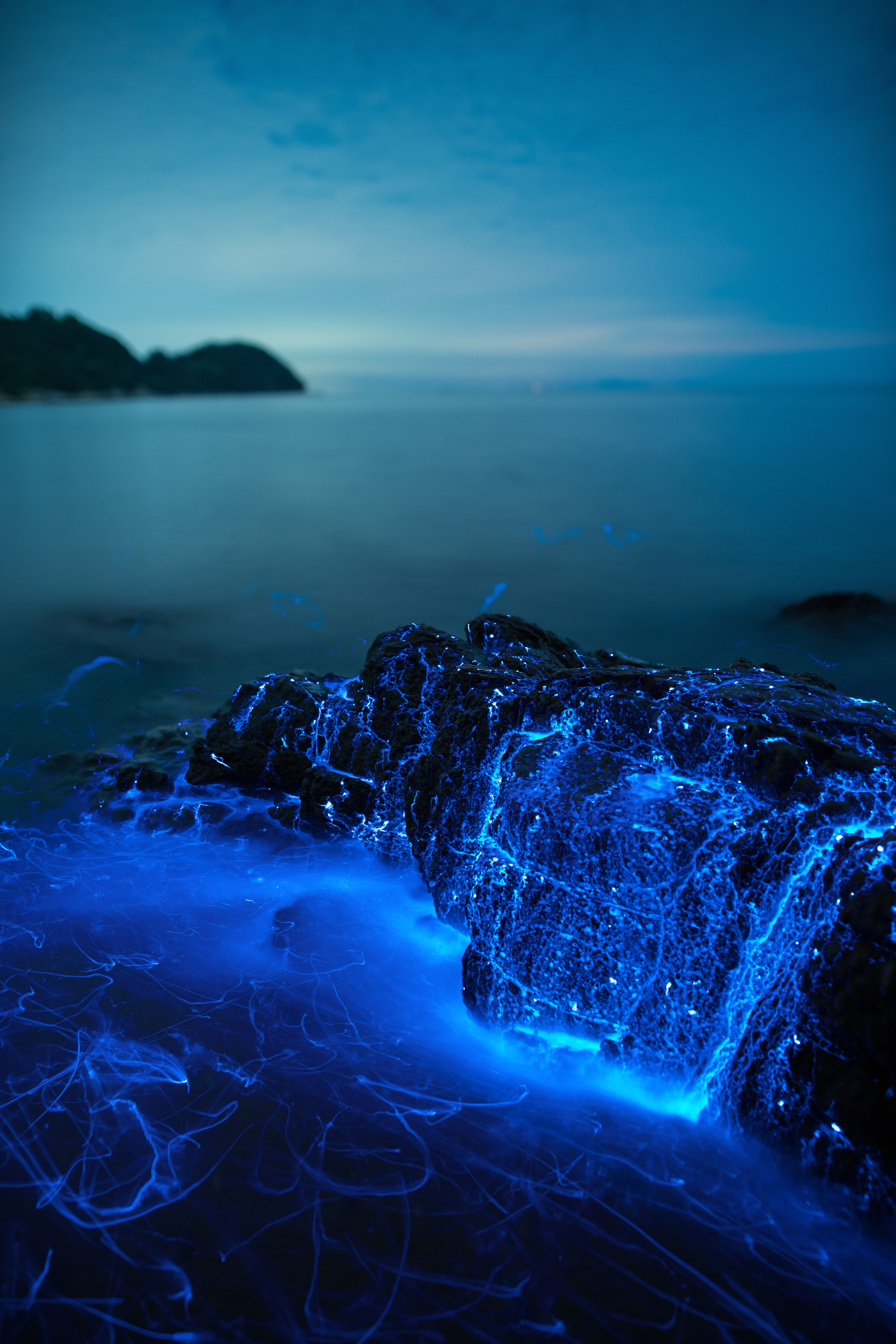 Seasonal lightshow: Sea fireflies are relatively common on sandy beaches in the Seto Inland Sea throughout summer.