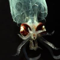 Scientists collect deep-sea life off Hawaii
