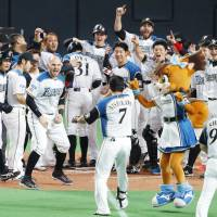 The Fighters' Haruki Nishikawa approaches home plate to meet his euphoric teammates after bashing a sayonara grand slam in the ninth inning against the Carp in Game 5 of the Japan Series on Thursday night at Sapporo Dome. Hokkaido Nippon Ham defeated Hiroshima 5-1 to take a 3-2 lead. | KYODO