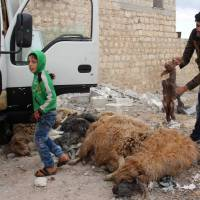A man checks killed animals in the Syrian village of Kfar Jales, on the outskirts of Idlib, following airstrikes by Syrian and Russian warplanes Wednesday. | AFP-JIJI