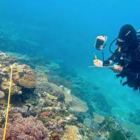 Researcher Grace Frank completes bleaching surveys along a transect line on an area known as One Tree Reef, in the Capricorn Group of Islands, on Australia's Great Barrier Reef in this undated photo. | REUTERS