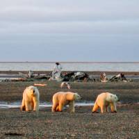 Overheated Arctic sign of climate change 'vicious circle'