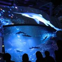 Visitors watch projection-mapping on a large tank at Enoshima Aquarium in Fujisawa, Kanagawa Prefecture, on Sept. 16. | KYODO