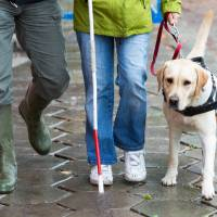 1 in 5 blind with guide dogs have fallen off Japanese station platforms: poll