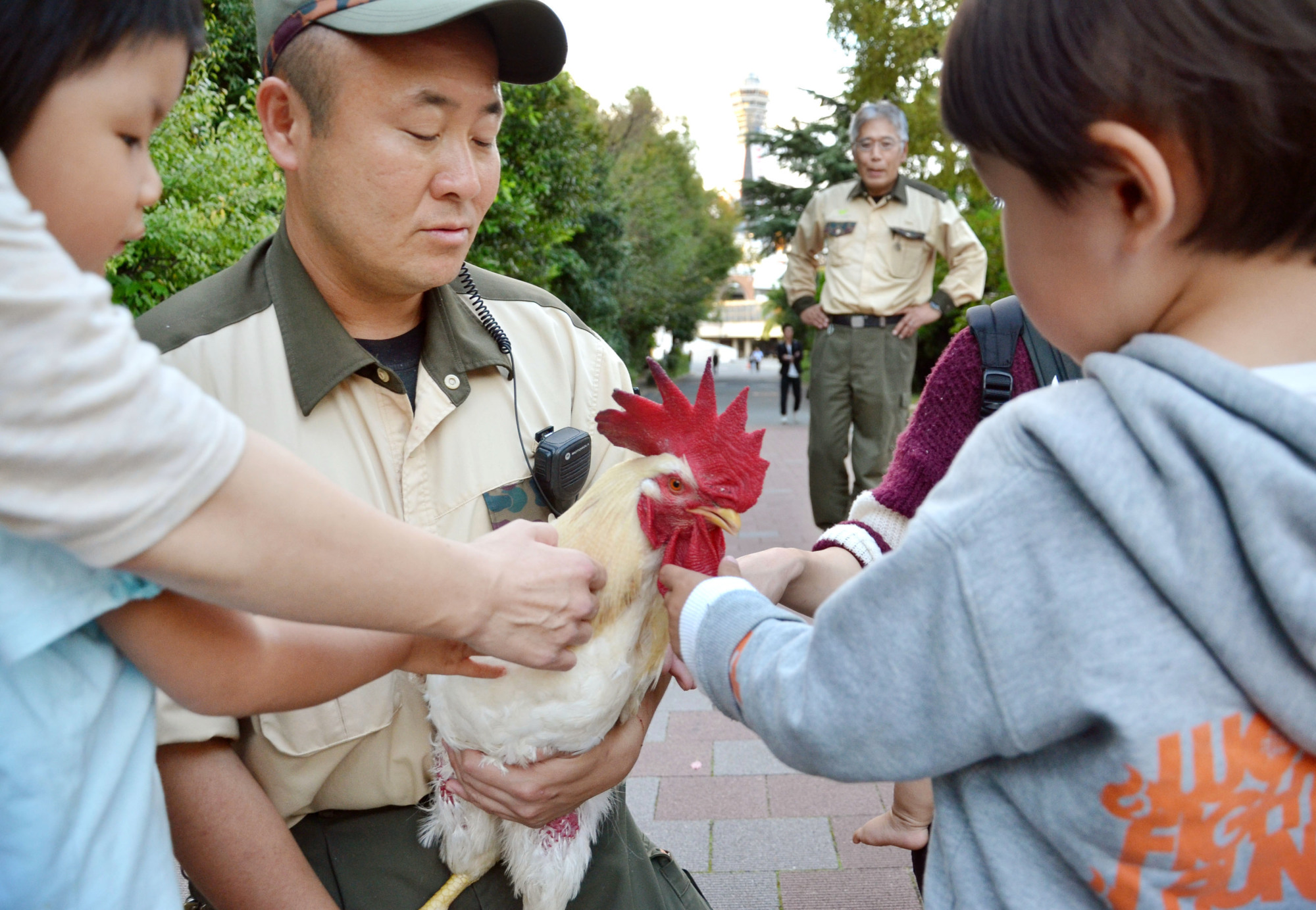 Visitors to Tennoji Zoo in the city of Osaka pet Masahiro, a rooster who has survived the threat of being another animal's food three times, in mid-October. | KYODO