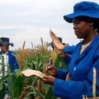Zimbabwe crop farmers banking on science