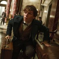 'Fantastic Beasts and Where to Find Them' delivers giddy escapism