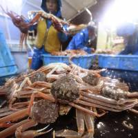 Japan sees crab prices surge as poached imports sink
