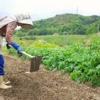 To alleviate the shortage in farm workers, the government is planning to allow skilled non-Japanese to work in the agricultural industry in special economic zones. | ISTOCK