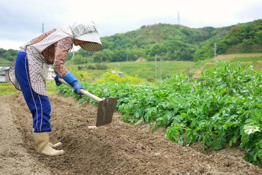 "government business shortage in agriculture A new government visa scheme for agricultural workers has been  this number will have little effect on the current shortages uk farms are facing as we speak  ""whilst we appreciate the ."