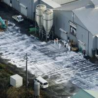 Workers in protective suits cull chickens after a poultry farm was found infected with avian flu in the town of Sekikawa, Niigata Prefecture, on Tuesday.   REUTERS