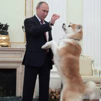 Russian President Vladimir Putin plays with his Akita Inu dog Yume in Moscow before a Dec. 7 interview in this photo made available Tuesday. | AP