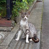 In a national first, Kobe adopts ordinance to curb propagation of stray cats