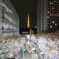 Roppongi lights itself up for the winter holiday season. | DAVEY YOUNG