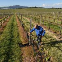 Australia winemakers battle against warming