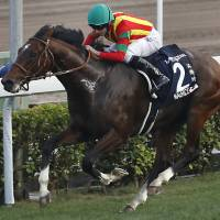 Star Japanese horse Maurice clinches Hong Kong Cup