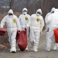 Bird flu-plagued South Korea to buy U.S. eggs as Germany starts new cull