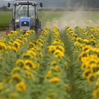 Farmer Teruhiko Sasaki poses in his sunflower field in Iwamizawa, Hokkaido, in July 2012. Farmers have expressed mixed reactions to U.S. President Donald Trump's decision to pull out of the Trans-Pacific Partnership trade pact. | BLOOMBERG