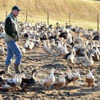 China reports fourth human death from bird flu as France wages mass duck cull to stem another strain's spread