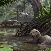 Giant otters the size of wolves once roamed southwest China, fossils show