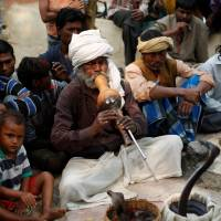India snake charmers struggle to survive as tradition slowly dies out