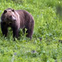 Trump pick Price defends health stocks; DeVos backs guns in schools against grizzly threat