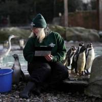 London zoo begins resident inventory, counting penguin chicks, tiger cubs