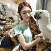 A worker at the Kotori Cafe in Tokyo holds an umbrella cockatoo on her hand in October. | KYODO