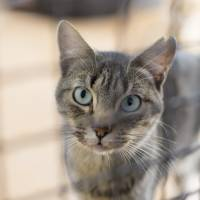 Toray Industries Inc. will start selling a drug in April to treat chronic kidney disease in cats. | ISTOCK